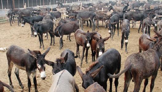 扶风县大型养驴基地在哪里