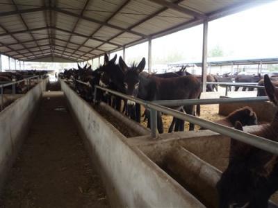 磐石市办养驴场需要投资多少钱