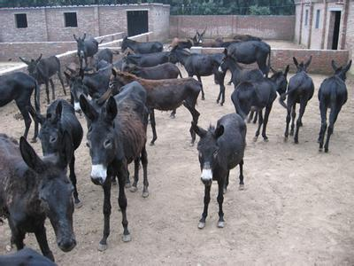 开原市大的养驴场在哪里