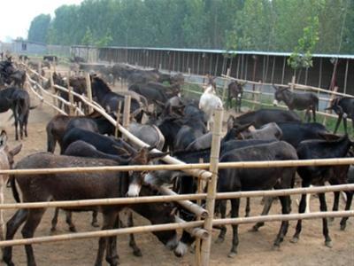 莒南县哪儿养驴的多