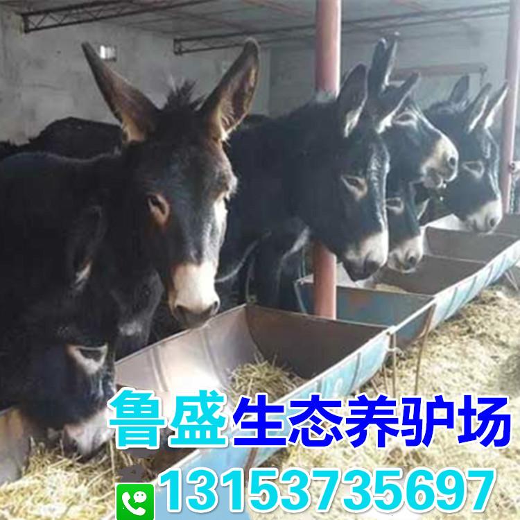 濮阳市大型养驴基地在哪里