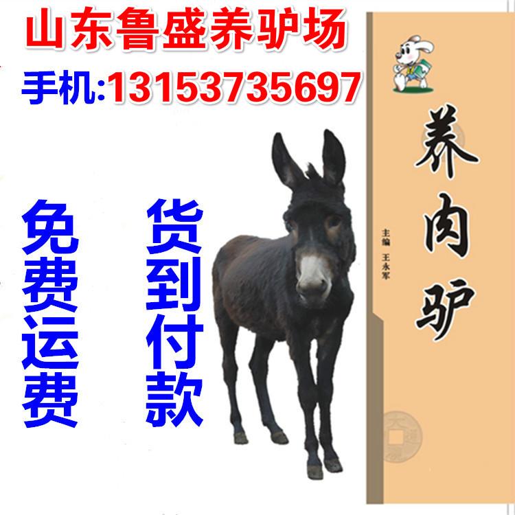 巴楚县哪里有养驴厂