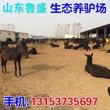 古塔大的养驴场在哪里图片