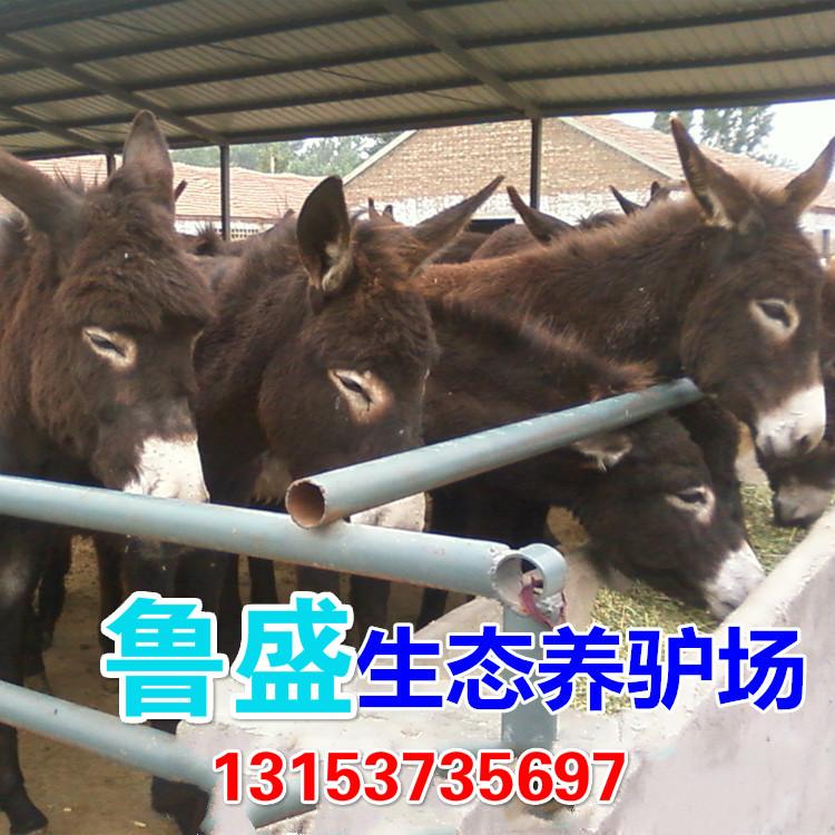 锡林浩特市大型养驴基地在哪里