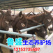 黄山市大型养驴基地在哪里
