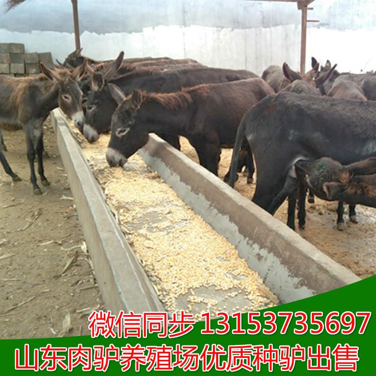 靖宇县规模大的养驴场