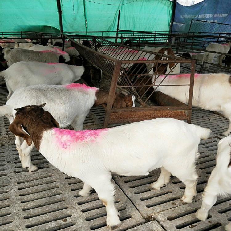 安徽养羊场