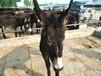松原市养殖肉驴