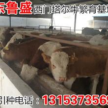 株洲市哪里有肉牛苗出售价钱多少图片