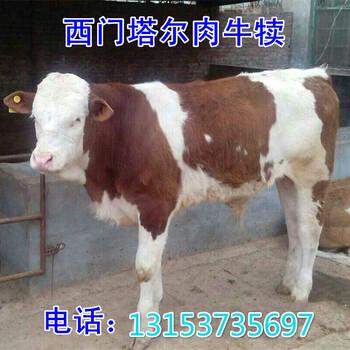 淮北市黄牛苗一年能长多少斤-