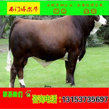 黄南牛犊饲养