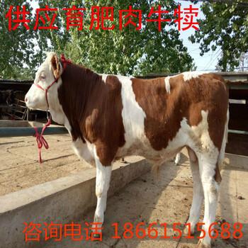 临沧市小牛犊养殖场