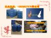 广州高旺独家配方蓝白火醇油添加剂,高效低成本甲醇乳化剂,燃烧无色无味