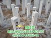 临沧公路水泥标志桩界桩生产厂家铁路保护区界桩