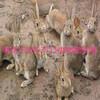 兔笼制作方法