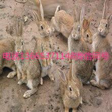重庆兔子养殖基地