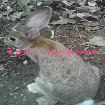 养殖兔子每天喂多少食物