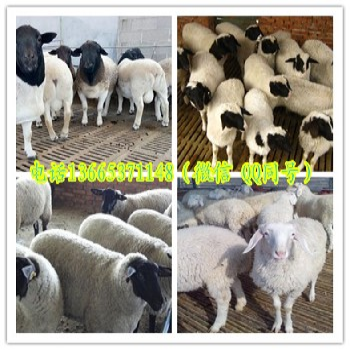 养羊棚设计图