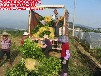 平和县正达蜜柚种苗有限公司—品种纯正,价格实惠,成活率高