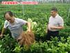 广西三红蜜柚苗口碑比较好成活率高的基地