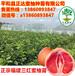 广西三红蜜柚苗多少钱一棵,蜜柚苗价格
