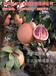 贵州这家卖的三红蜜柚苗存活率高丨哪里有三红蜜柚苗购买丨三红柚子苗哪里有