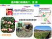 福建三红蜜柚苗最新报价_好品种三红柚子苗贵州有卖吗