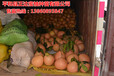三红蜜柚营养丰富,铜仁可以种三红蜜柚苗的哦