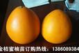 黄金3号蜜柚苗什么价格,福建金桔蜜柚苗种植技术