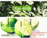 出售纯甜葡萄柚苗、台湾甜葡萄柚苗专业培育基地批发