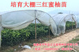 平和三红蜜柚苗是怎么卖的,琯溪三红柚子苗一棵价钱多少