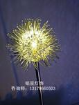 蒲公英景观灯LED铝线球蒲公英发光圆球景观灯插地景观装饰灯厂家直销图片
