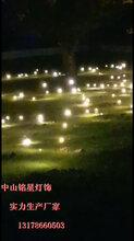 源头工厂铭星批发LED光纤创意灯萤火虫星星灯LED摇摆萤火虫灯图片