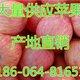 58P6MD$ZP~B5V62$PX}4QYG_副本