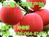 山西红富士苹果基地信息哪里有苹果