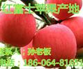 山西红富士苹果销售渠道中国苹果网