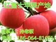 2016年红富士苹果价格趋势红富士苹果批发产地好吃的苹果