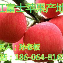 中国红富士苹果产量最大苹果市场价格红富士价格