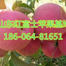 红富士苹果批发价格及零售价格山东苹果批发价格红富士苹果产地