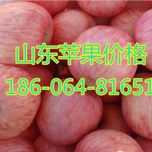 红富士苹果供应红富士苹果供应红富士苹果种植基地红富士价格图片