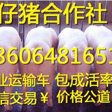 贵州小猪大型养殖场三元仔猪供应基地