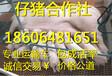 广东外三元苗猪多少钱一头小猪多少钱一头
