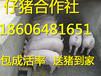 黑龙江2017仔猪价格趋势仔猪大型猪场