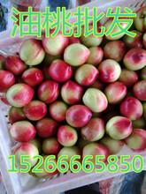 山东毛桃哪的便宜油桃要怎么运输