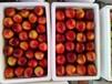 山东黄油桃批发市场山东大棚油桃种植基地在那