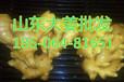 小姜供应基地,山东生姜种植