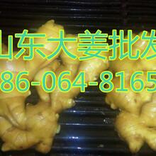 山东优质3两以上生姜种植基地,山东生姜批发图片