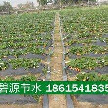 江西星子县亿碧源智慧农业水肥一体化施肥机施肥罐行业领先