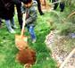 洛阳最好的家族墓园-凤凰山纪念园珍品杰作龙凤园隆重面世