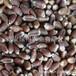 營養保健品種-紫麥1號黑小麥種子產量高營養好